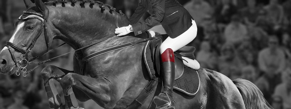 parlanti-horse